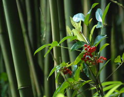 Exotic Places = Exotic Photos / Bamboo & Red Berries - (c) 2007 Ted Grellner